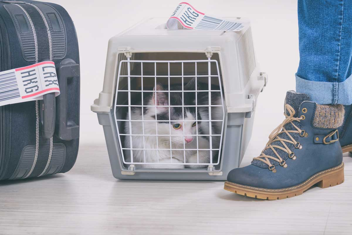 Cat lying down inside of cage with air travel ticker on container