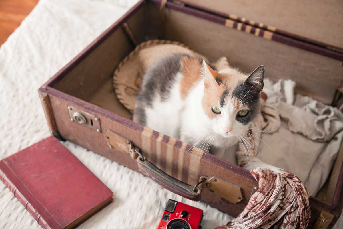 Cat on brown briefcase looking at camera