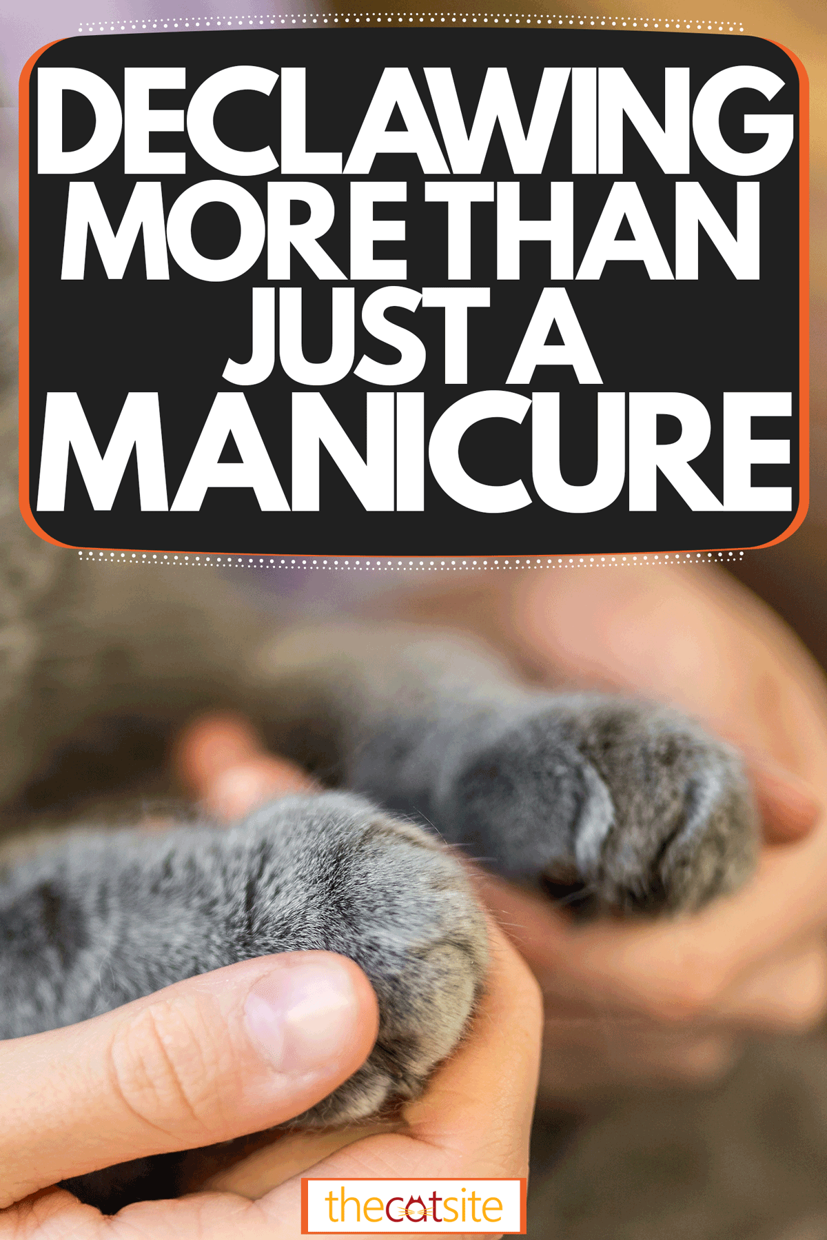 A super cute fluffy cat getting his claws trimmed, Declawing - More Than Just A Manicure