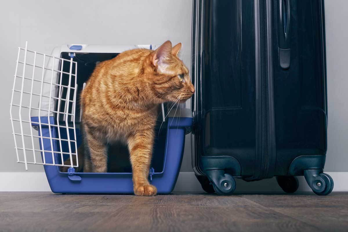 Ginger cat walking out of blue cage, Traveling With Cats [Inc. 36 actionable tips]