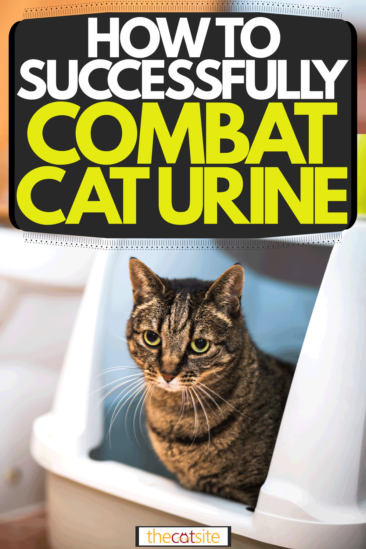 A cat sitting inside his litter box, How to Successfully Combat Cat Urine