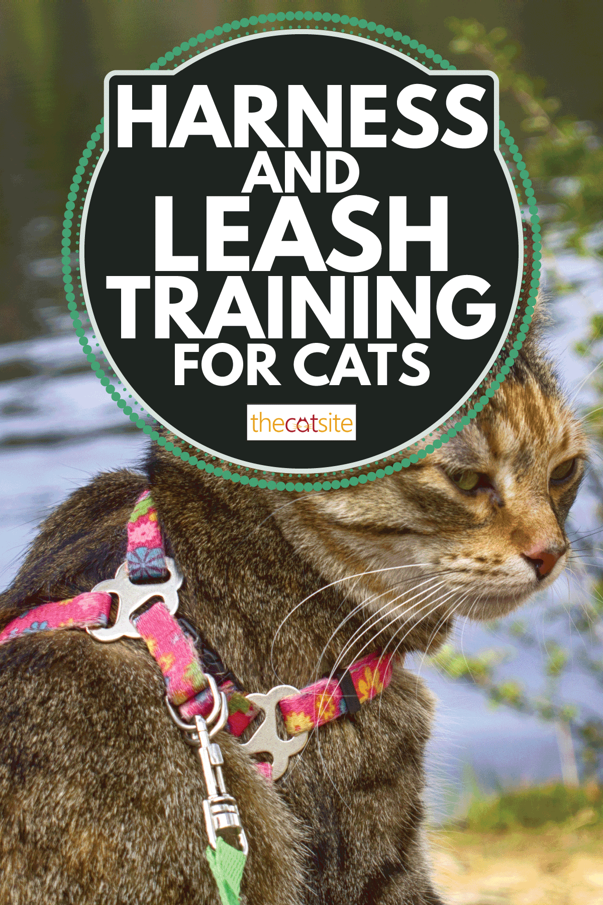 Pet cat for walk in wild. Leash and harness for cats, Amid the rivers and forests. Harness And Leash Training For Cats