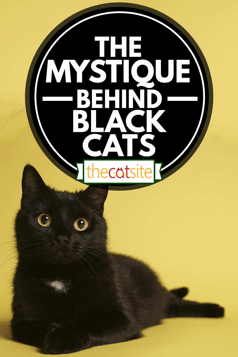 Black cat on yellow background, The Mystique Behind Black Cats