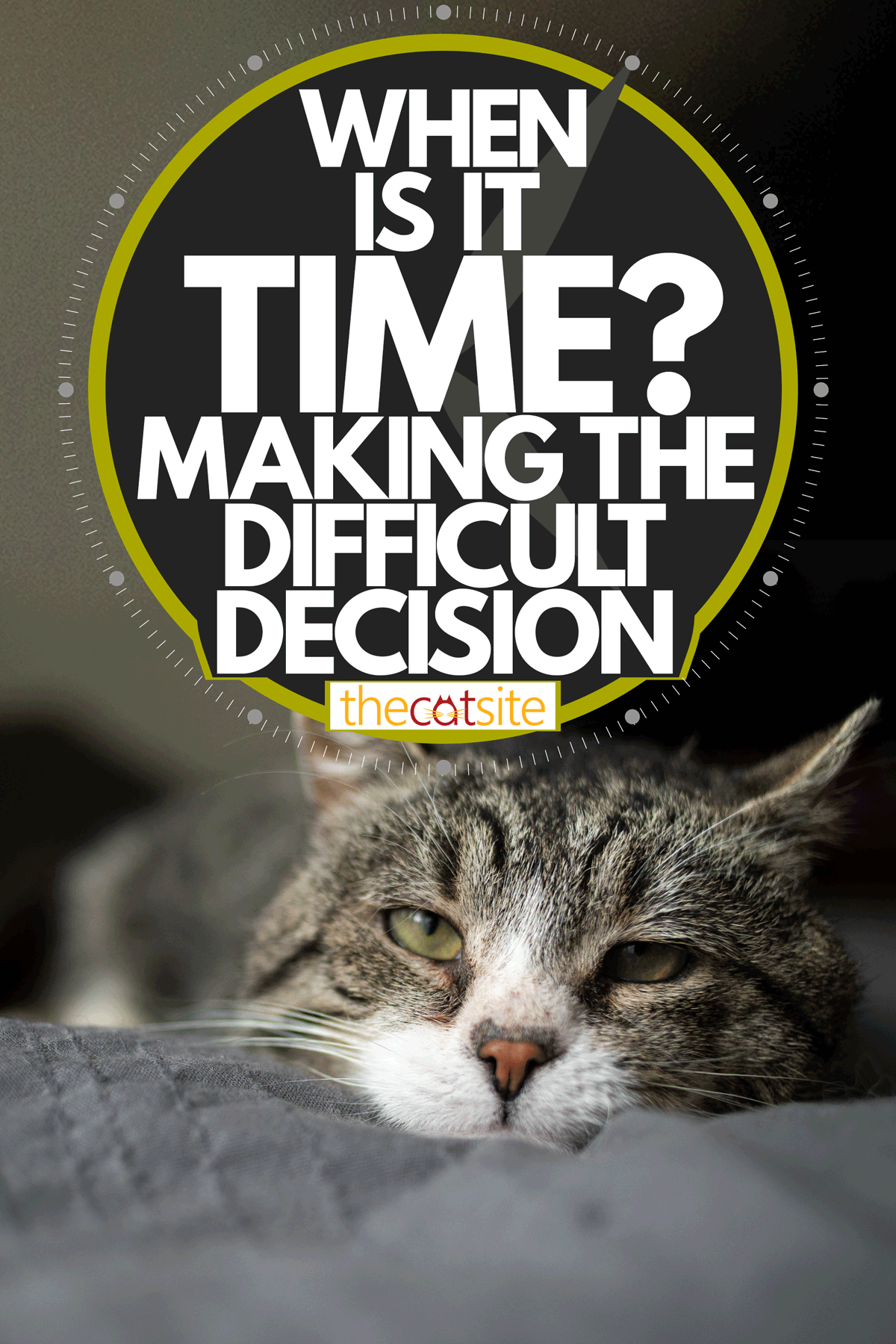 An old cat lying and resting on the bed, When Is It Time? - Making The Difficult Decision