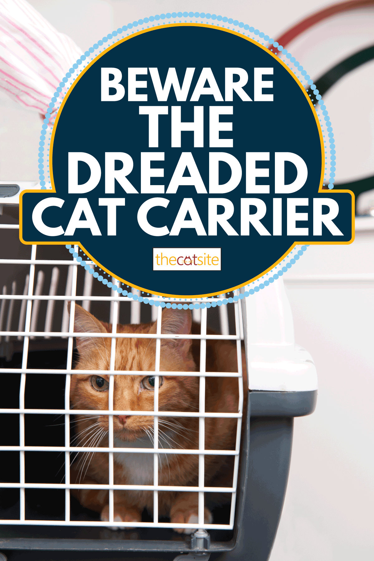 Woman Taking Cat To Vet In Carrier. Beware The Dreaded Cat Carrier