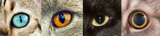Change in cat's pupil