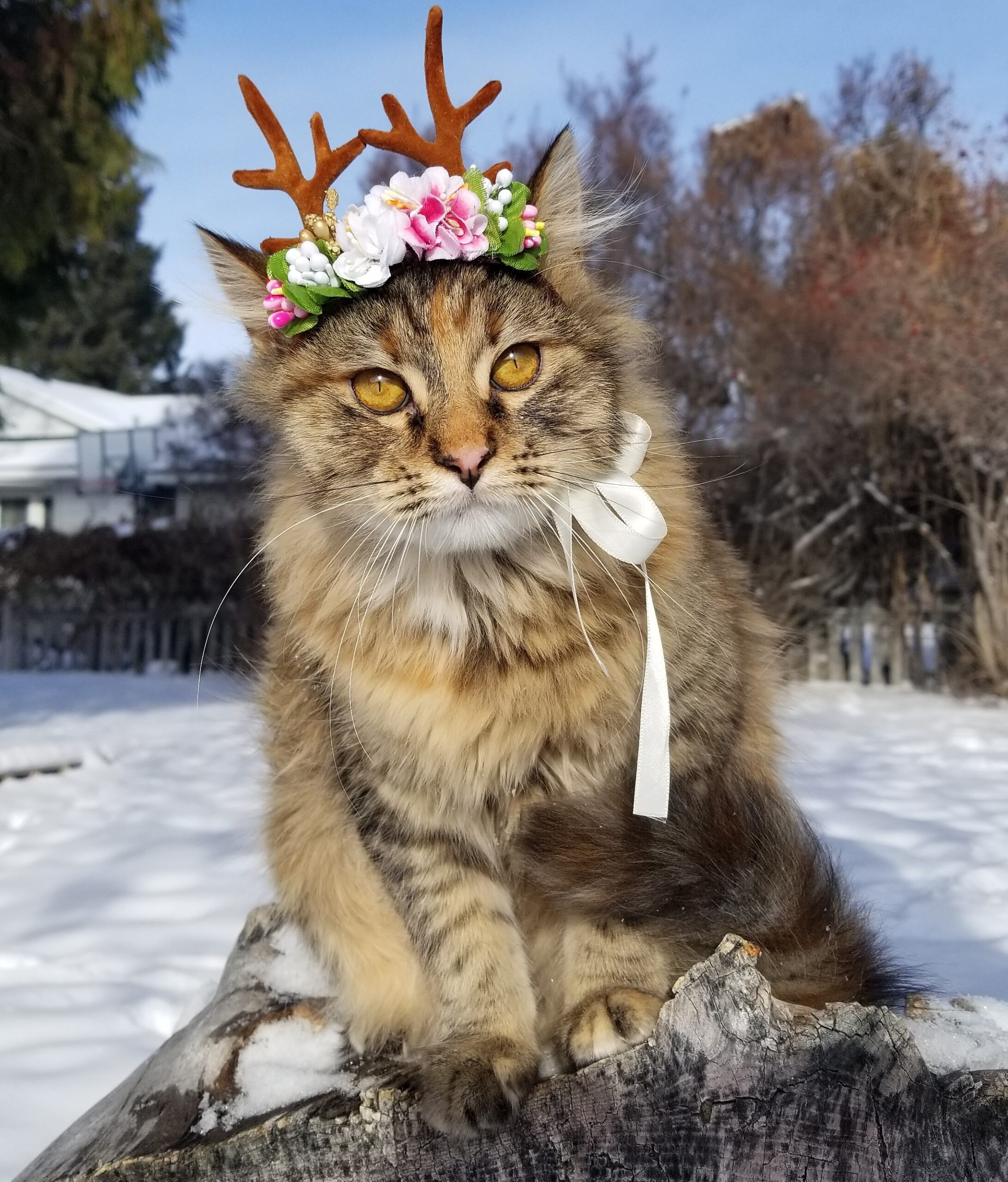 Tabby cat outdoors in snow dressed as reindeer