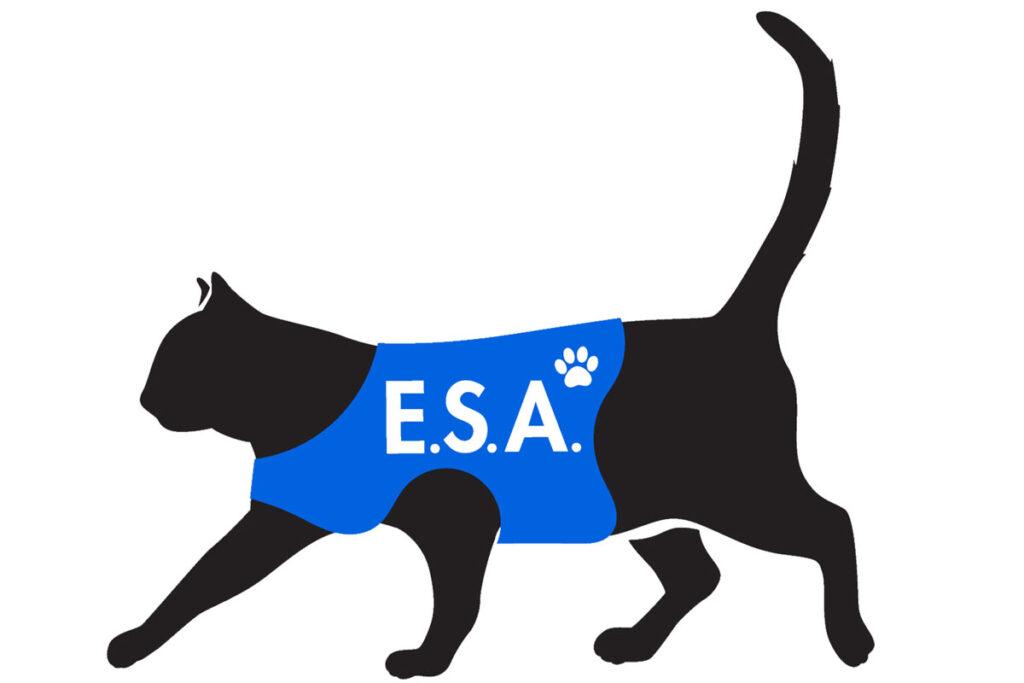 A cat with ESA vest