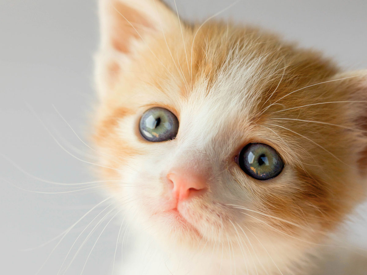 Kitten eye color begins to develop as they grow