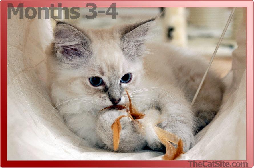 Kitten aged 3-4 months
