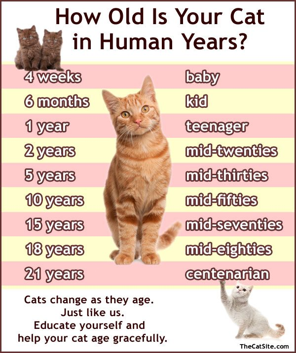how old is my cat in human years