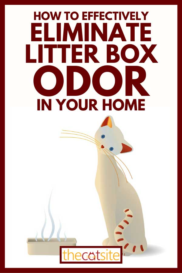 Animated cat sitting next to cat litter, How To Effectively Eliminate Litter Box Odor In Your Home