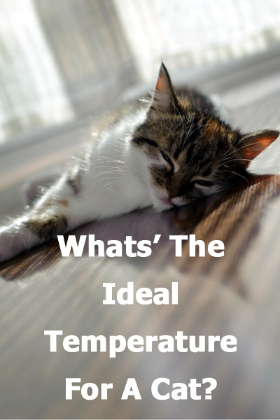 What's the ideal temperature for a cat