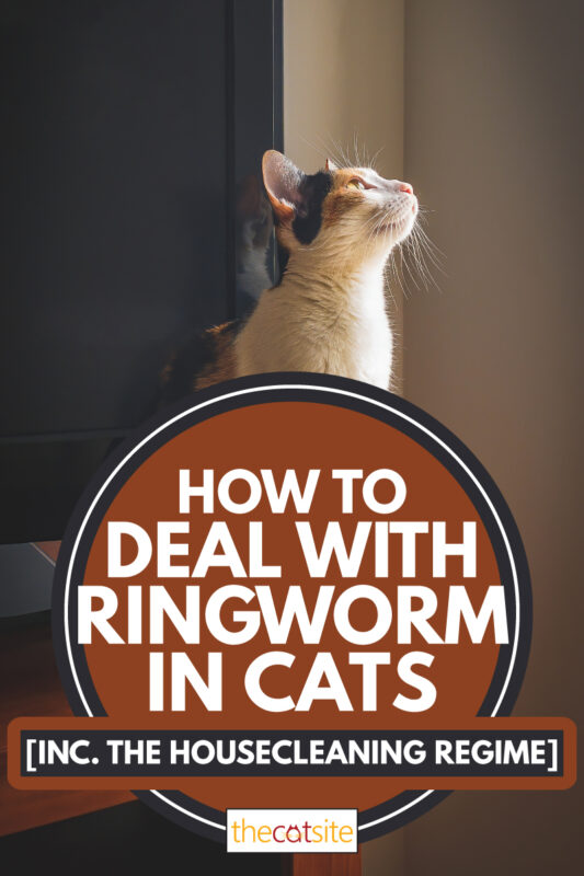 A female cat looking up toward a light source, How to deal with ringworm in cats [Inc. The Housecleaning Regime]