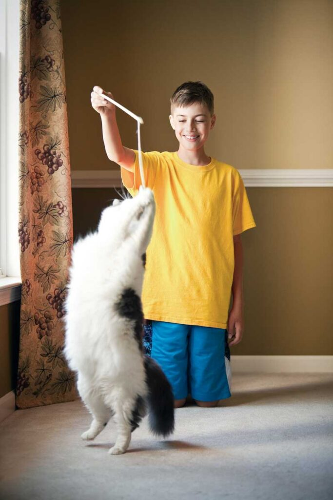 A-big-white-cat-jumping-for-the-toy-that-a-smiling-boy-is-holding-over-her