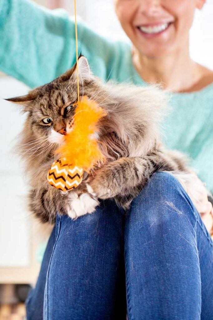 Happy-Adult-Female-Pet-Owner-Playing-with-Her-Siberian-Cat