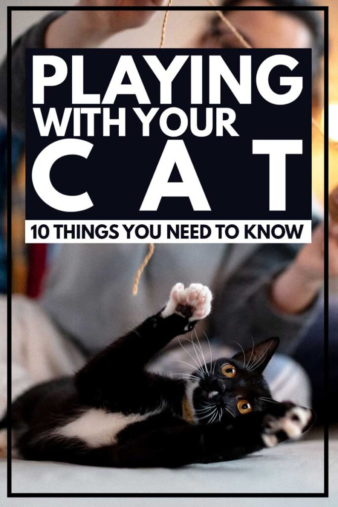 Playing-With-Your-Cat-10-Things-You-Need-To-Know