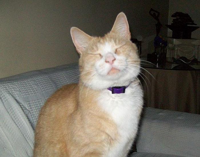 Smiling cat with eyes shut