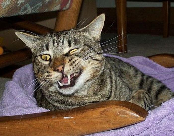 Cat half smiling