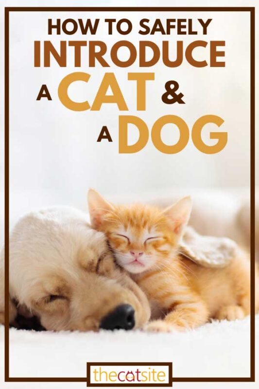 A puppy and kitten sleeping together, How To Safely Introduce A Cat And A Dog