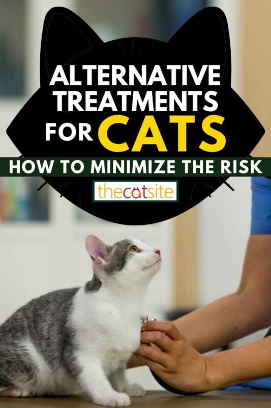 A veterinarian is checking on a a kitten at her office, Alternative Treatments For Cats: How To Minimize The Risk