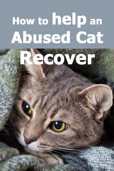help abused cat recover