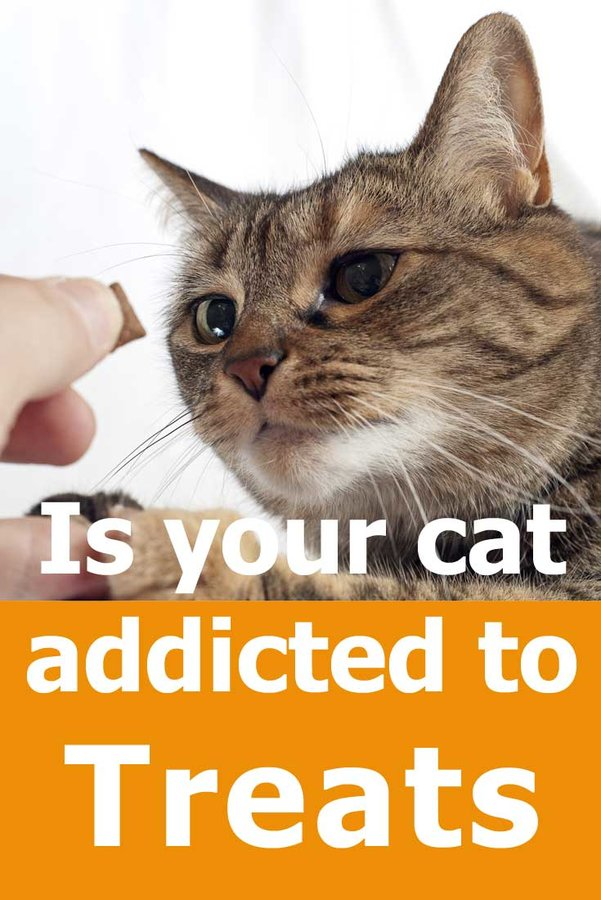 Is your cat addicted to treats?