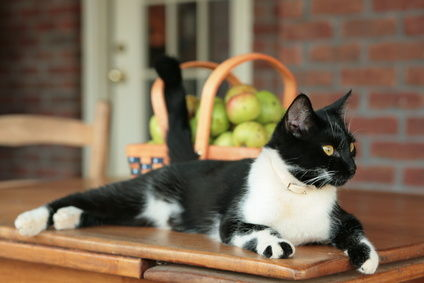 A cute black and white cat lying on the kitchen countertop, How To Keep Cats Off Counters And Tables