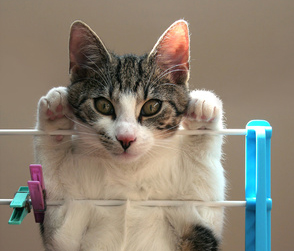 Cat hanging, cat staring at the camera, Cat Behavior Problems [What to do and what not to do]