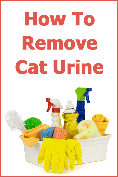 How To Remove Cat Urine