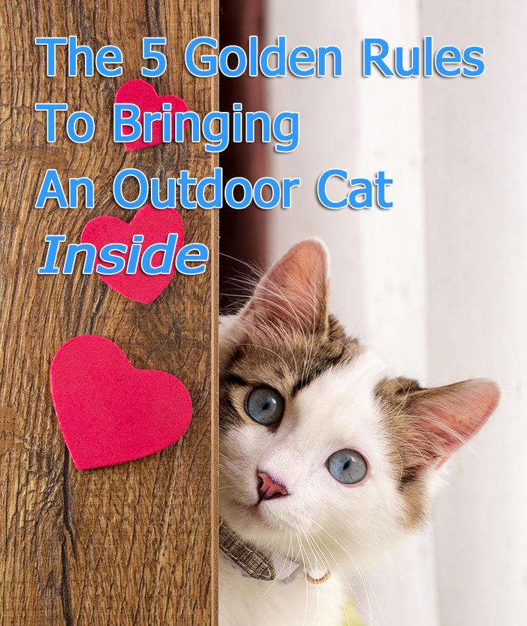 Bringing An Outdoor Cat Inside
