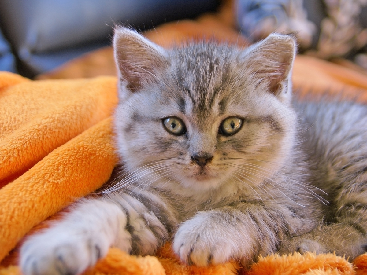 A gorgeous cat looking at the camera, 10 Essential Cat Safety Rules You Need To Know