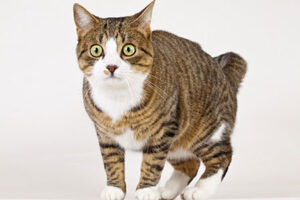 A potentially stressed cat, surprised cat,