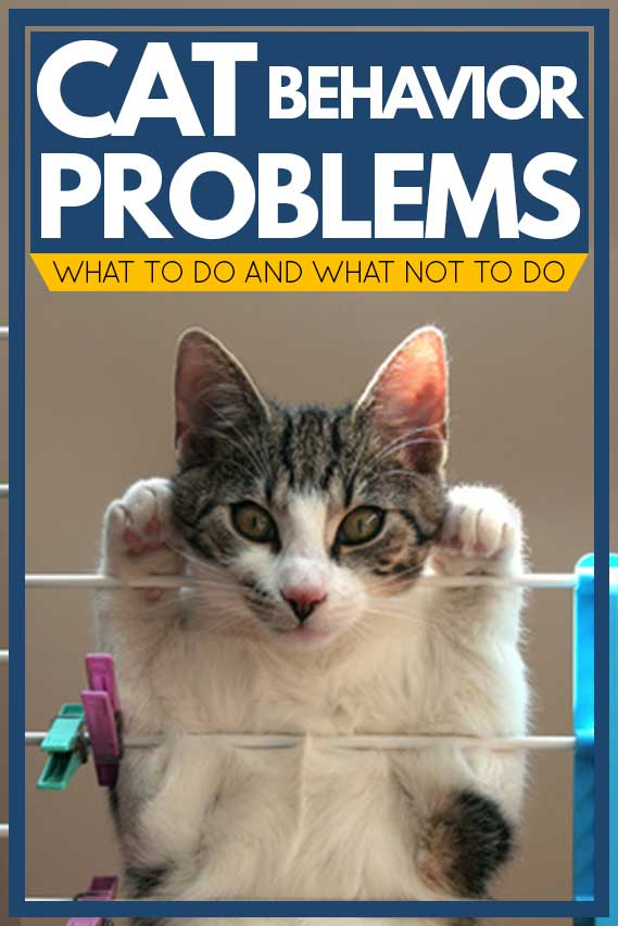 Cat Behavior Problems [What to do and what not to do]
