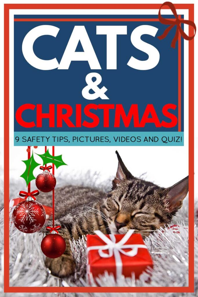 Cats And Christmas [9 Safety Tips, Pictures, Videos and Quiz!]
