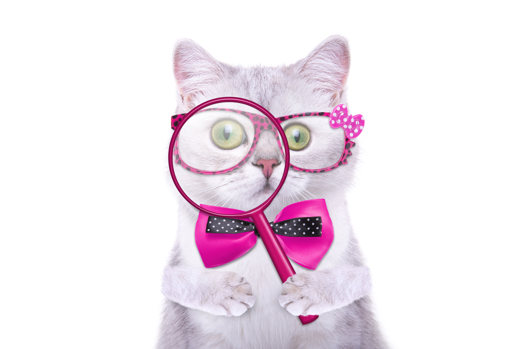 15 Cat Quizzes That Will Make You Smile (And Teach you something too!)