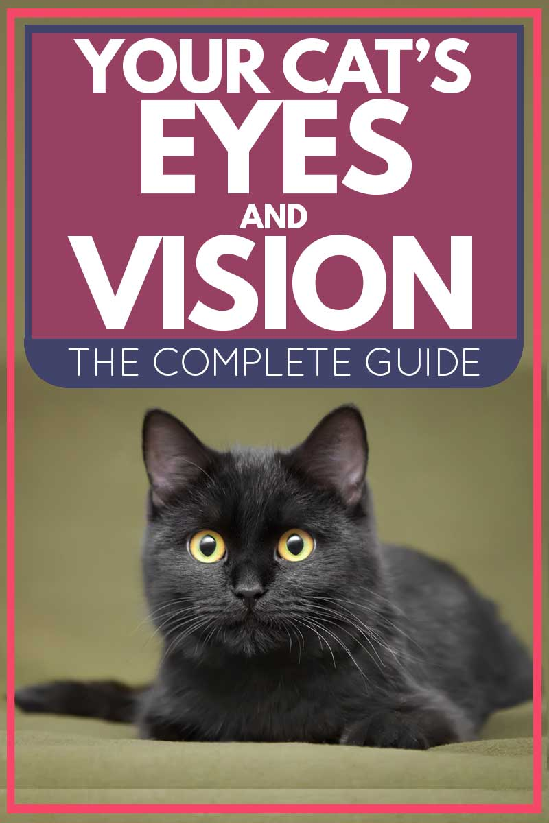 Your Cat's Eyes and Vision: The Complete Guide