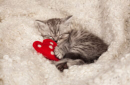 Ways that cats show love