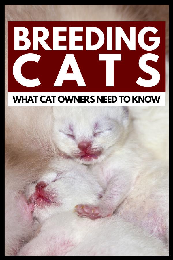 Newborn kittens breastfeeding and sleeping