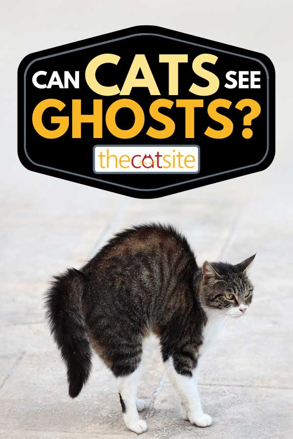 Photo of a scared cat on the street, Can Cats See Ghosts