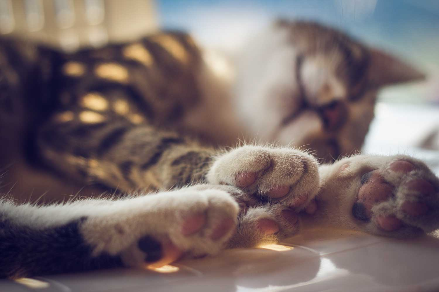 Paws of a sleeping domestic cat