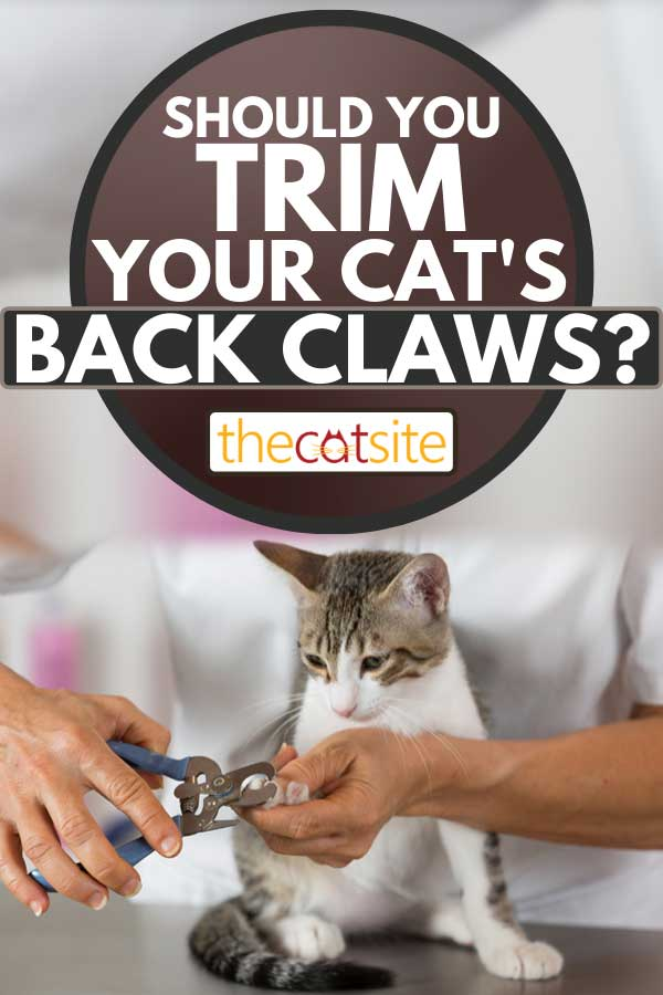 A hairdresser in a veterinary clinic cutting cat nails, Should You Trim Your Cat's Back Claws?