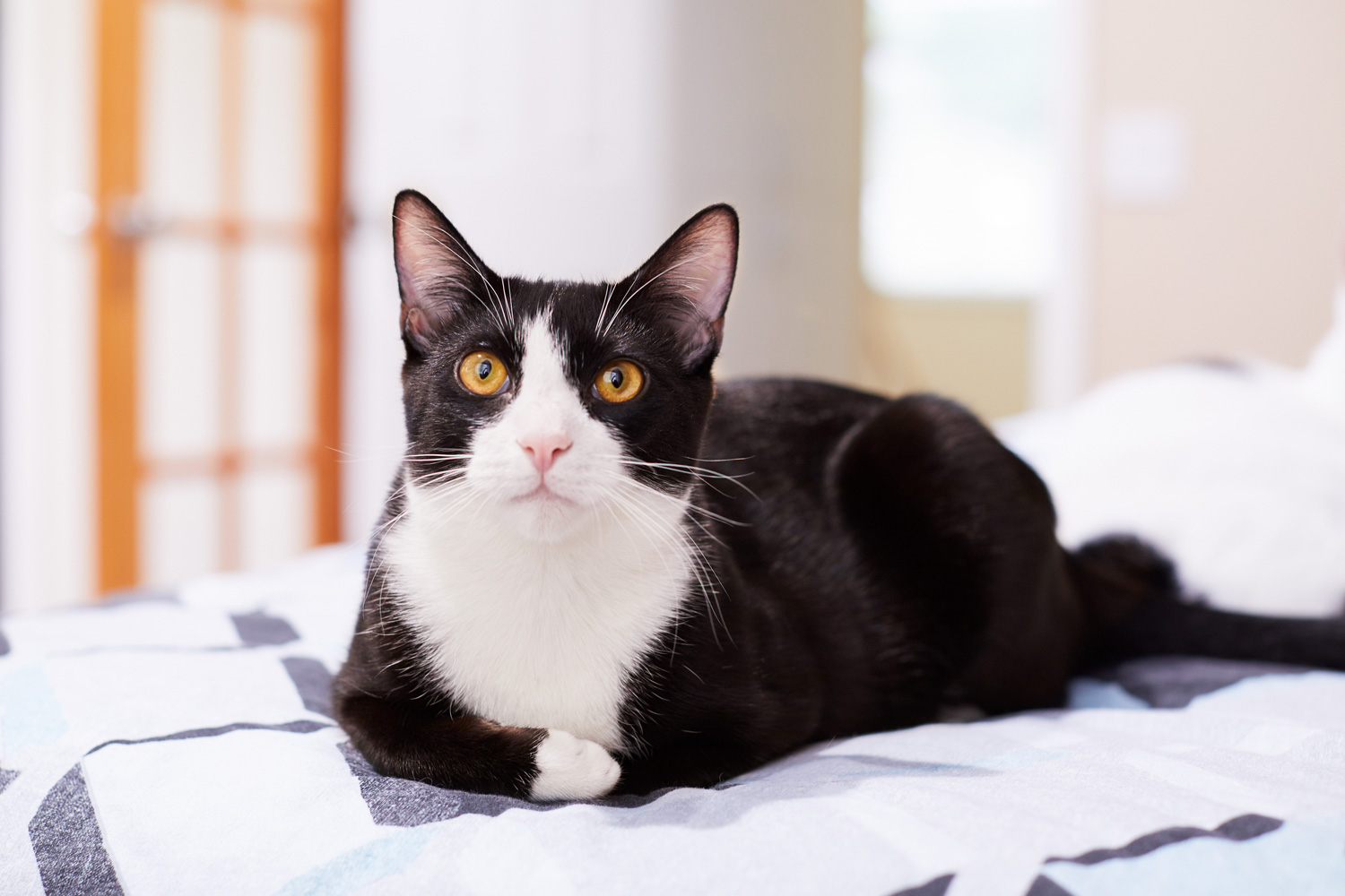 A black and white tuxedo cat lying on the bed of his owner