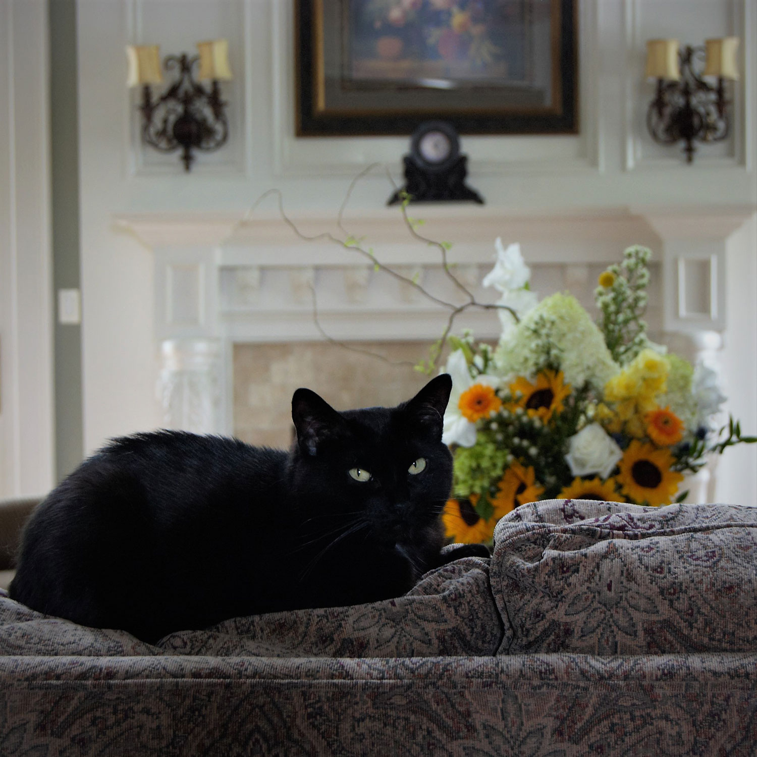A bombay cat sitting on the couch with flowers on the background