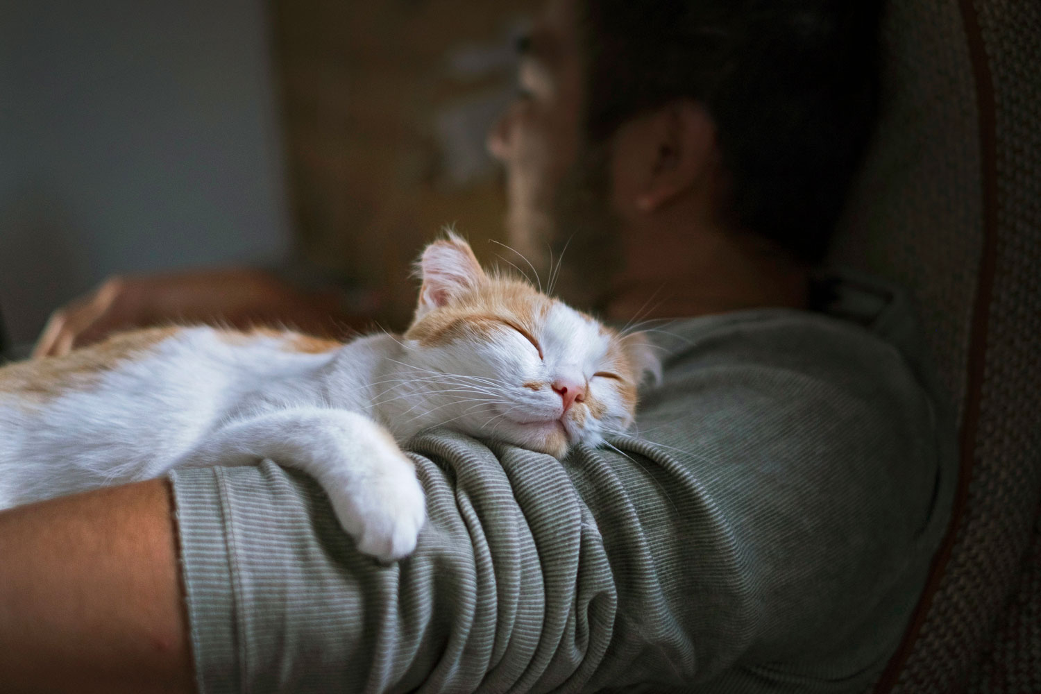 A brown and white domestic cat lying on his owner's shoulder while sleeping