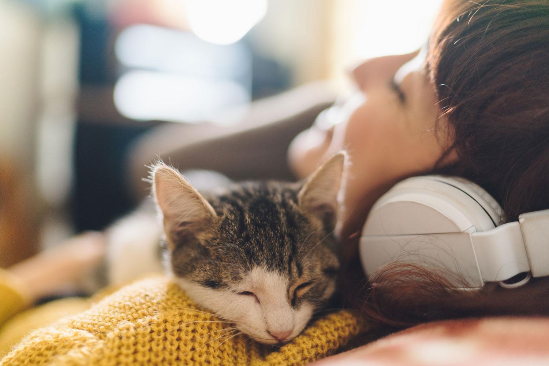 A cat lying on her owner's shoulder