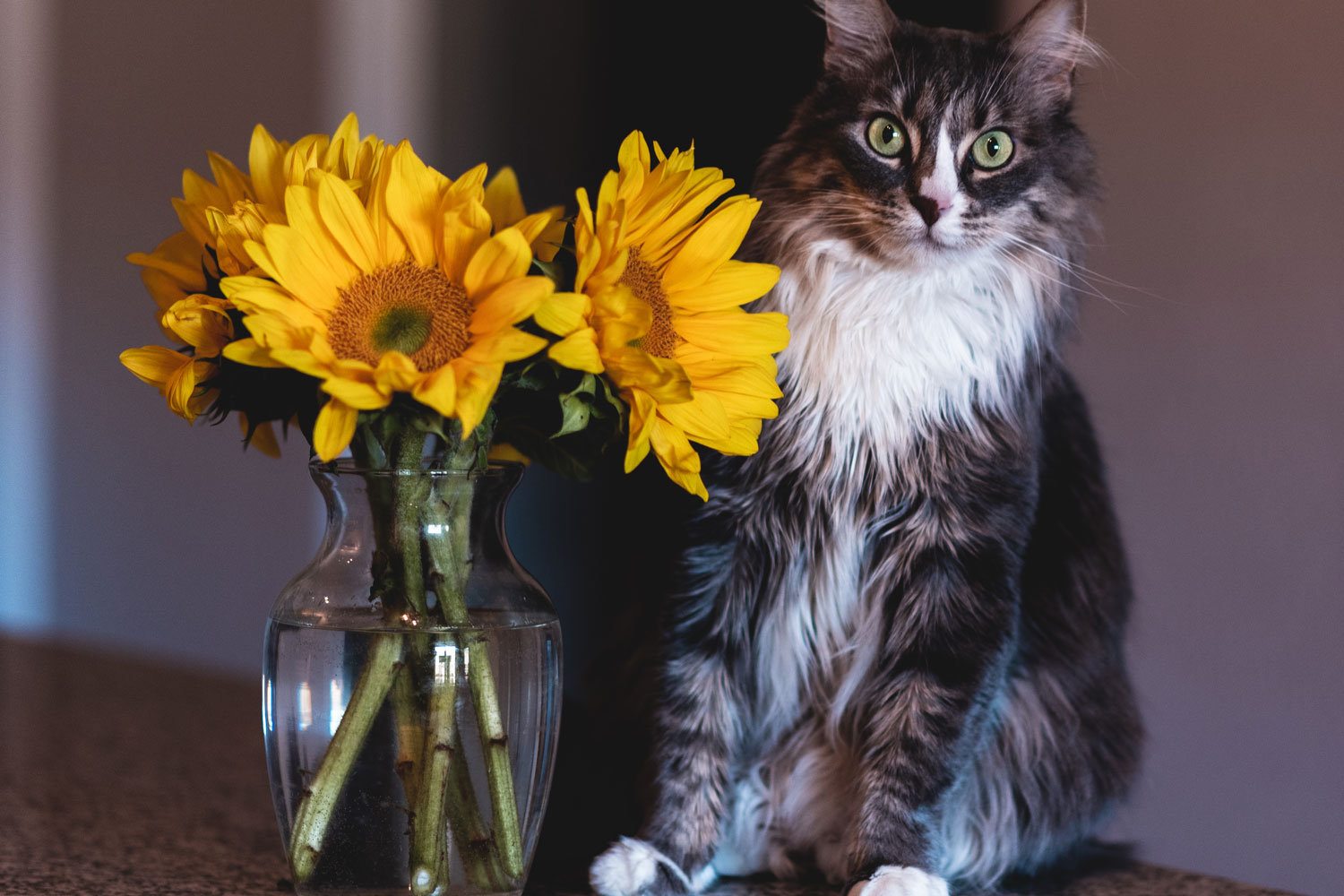A cat sitting next to a vase with sunflowers, Are Sunflowers Toxic To Cats?