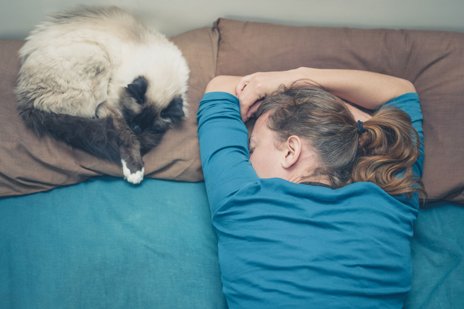 Cat snuggling on a pillow next to her owner, How Do Cats Choose Who to Sleep With?