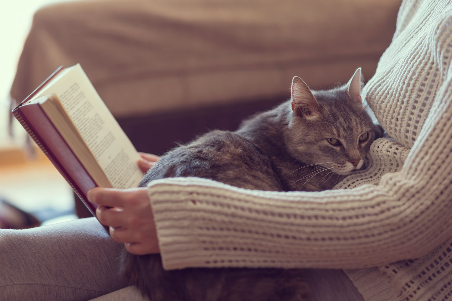 A cute tabby cat lying on her owners belly while her owner is reading a book