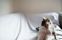 Small cute cat rubbing its face on its owner's socks, Why Do Cats Rub Against You?
